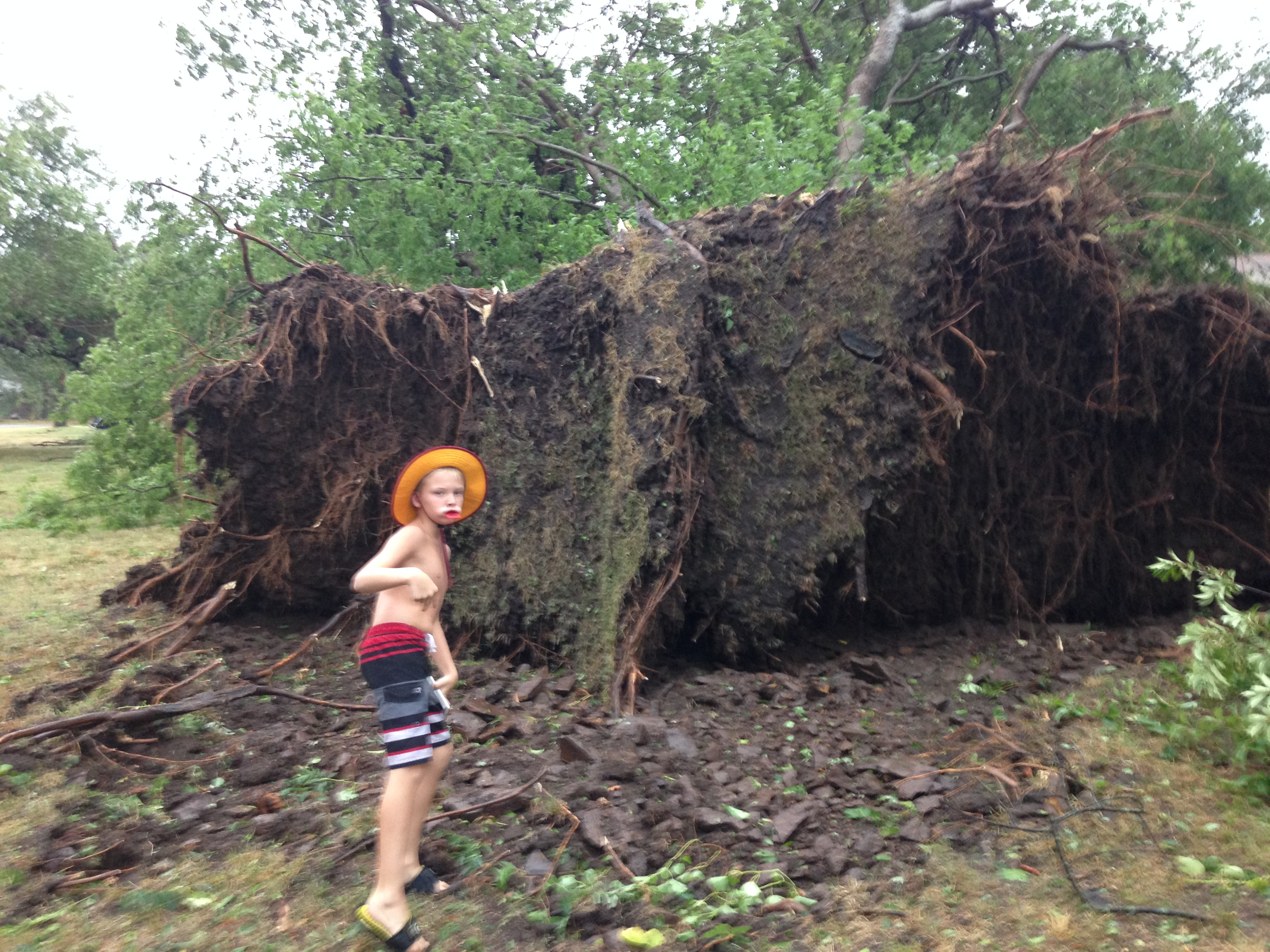 A tree is uprooted in Okay.